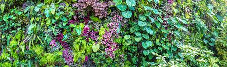 Panorama del jardín vertical con flores y hojas verdes tropicales. Fondo de la naturaleza
