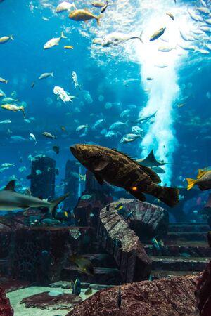DUBAI, UAE - NOVEMBER 13, 2012:  Large aquarium in Hotel Atlantis  in Dubai, United Arab Emirates.