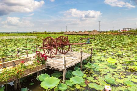 Lotus farm near Siem Reap, Cambodia in a summer day Фото со стока - 122665960