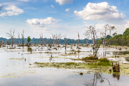 Swamp in complex Angkor Wat in Siem Reap, Cambodia in a summer day