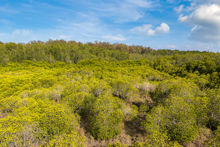 Mangrove forest at Khao Sam Roi Yot National Park, Thailand in a summer day Stok Fotoğraf - 112232897