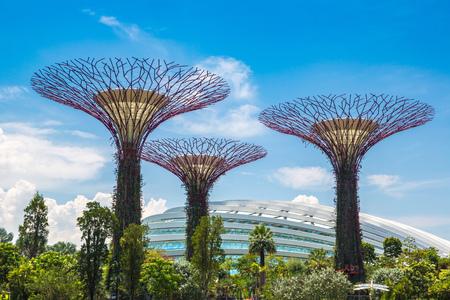 SINGAPUR - 23. JUNI 2018: Der Supertree Grove an den Gärten durch die Bucht und das Gewächshaus in Singapur nahe Marina Bay Sands Hotel am Sommertag