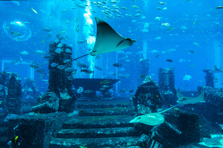DUBAI, UAE - JUNE 26, 2018: Lost chambers - Large aquarium in Hotel Atlantis in Dubai, United Arab Emirates Archivio Fotografico - 114034793
