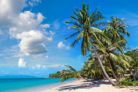 Tropical beach with palm trees on Koh Samui island, Thailand in a summer day Reklamní fotografie