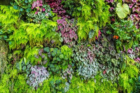 Jardín vertical con flores y hojas verdes tropicales. Fondo de la naturaleza