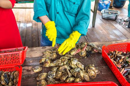 Pearl implantation at Pearl farm in Halong bay, Vietnam in a summer day 版權商用圖片