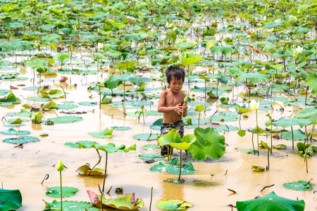 SIEM REAP, CAMBODIA - JUNE 11, 2018: Boy on lotus field at Lotus farm near Siem Reap, Cambodia in a summer day Redakční