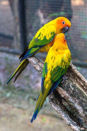 Bunte Papageien im Safari World Zoo in Bangkok an einem Sommertag