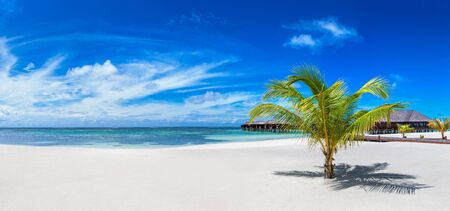 Panorama of Palm tree at Tropical beach in the Maldives at summer day