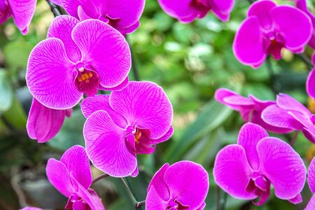 Violet Orchids flowers in park in a summer day