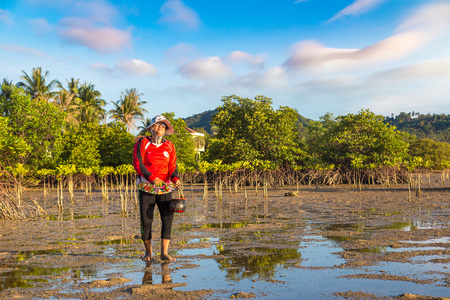 PHANGAN, THAILAND - MARCH 29, 2018: Woman clams harvested on Koh Phangan island, Thailand in a summer day
