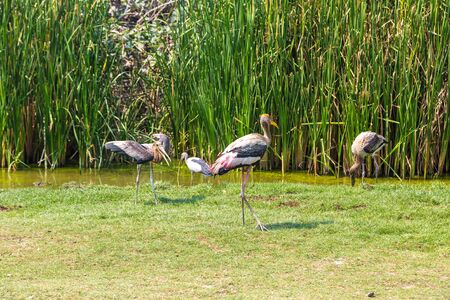 Birds in Safari World Zoo in Bangkok in a summer day