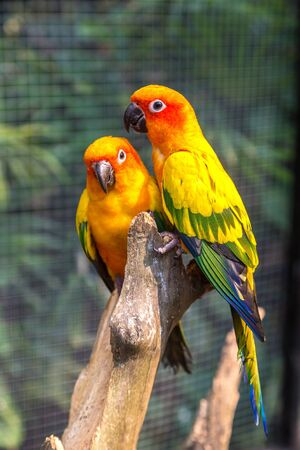 Colorful parrots in Safari World Zoo in Bangkok in a summer day