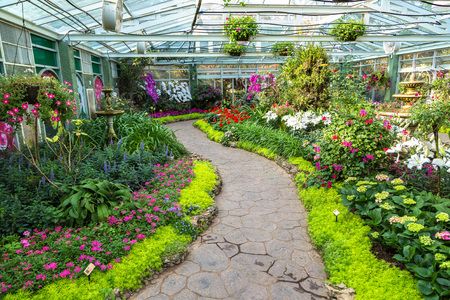CHIANG MAI, THAILAND - MARCH 29, 2018: Flowers in greenhouse in The Royal Ratchaphruek Park in Chiang Mai, Thailand in a summer day