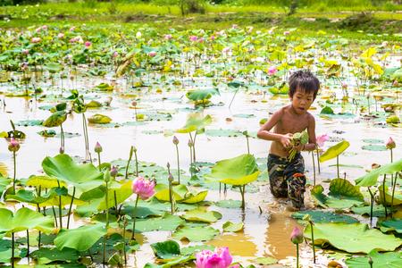 SIEM REAP, CAMBODIA - JUNE 11, 2018: Boy on lotus field at Lotus farm near Siem Reap, Cambodia in a summer day Redakční