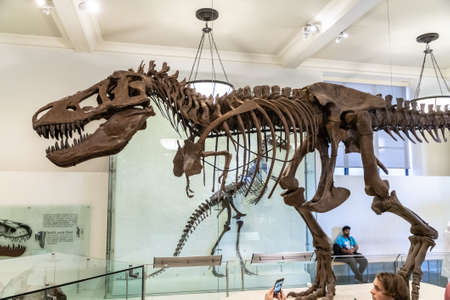 NEW YORK CITY, USA - MARCH 29, 2020: Dinosaur in American Museum of Natural History in New York City, NY, USA