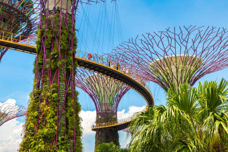 SINGAPORE - JUNE 23, 2019: The Supertree Grove and Skyway at Gardens by the Bay in Singapore near Marina Bay Sands hotel at summer day Editorial