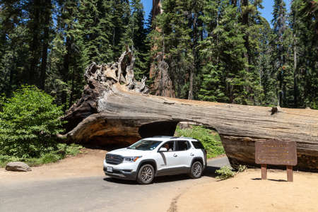 SEQUOIA NATIONAL PARK, CALIFORNIA, USA - MARCH 29, 2020: A car drives thru the Tunnel Log in Sequoia National Park in California, USA Editoriali