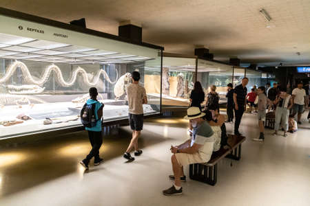 NEW YORK CITY, USA - MARCH 29, 2020: Interior of American Museum of Natural History in New York City, NY, USA