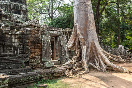 Banyan tree roots in Banteay Kdei temple is Khmer ancient temple in complex Angkor Wat in Siem Reap, Cambodia Banque d'images