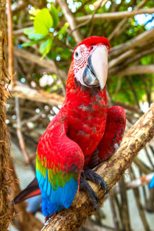Macaw (Ara ararauna) Parrots stand on the tree branch in a summer day
