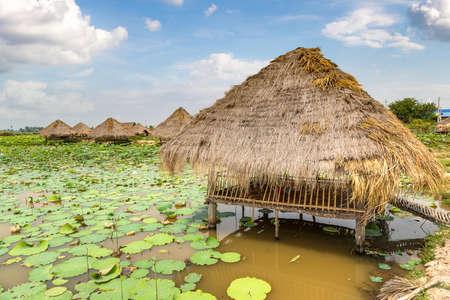Lotus farm near Siem Reap, Cambodia in a summer day