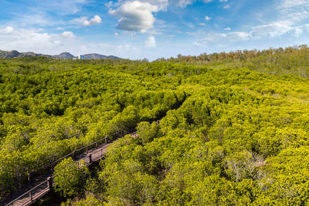 Mangrove forest at Khao Sam Roi Yot National Park, Thailand in a summer day