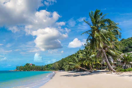 Tropical beach with palm trees on Koh Samui island, Thailand in a summer day Banque d'images