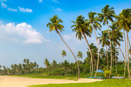 Shinagawa tropical Beach in a sunny day in Sri Lanka Фото со стока
