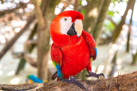 Red parrot ara at tropical jungle in a sunny summer day