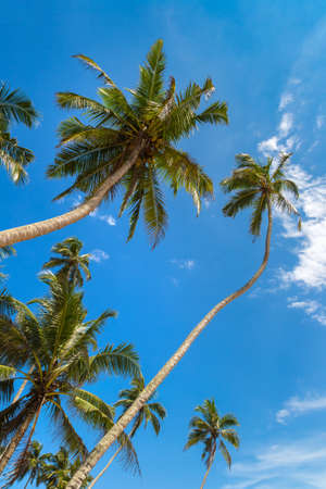 Palm tree against blue sky in a sunny day