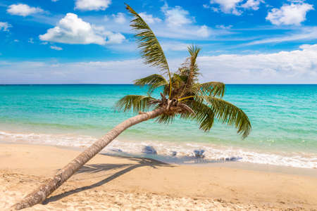 Single Palm tree hanging over tropical beach in a sunny day