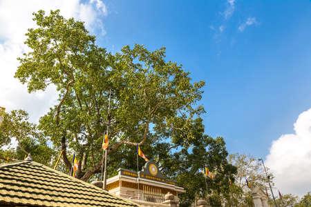 Jaya Sri Maha Bodhi temple in Anuradhapura Archaeological Museum in Sri Lanka
