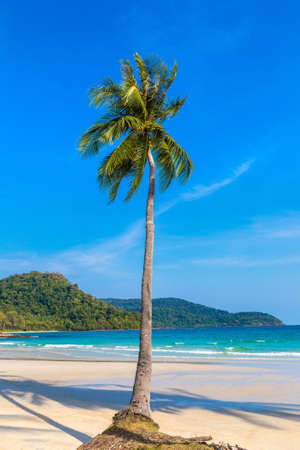 Palm tree hanging over tropical beach in a sunny day