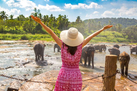 Woman tourist  looking at Herd of elephants at the Elephant Orphanage in Sri Lanka