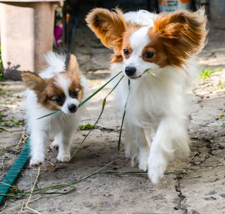 molly: Molly and indigo walking around garden Stock Photo