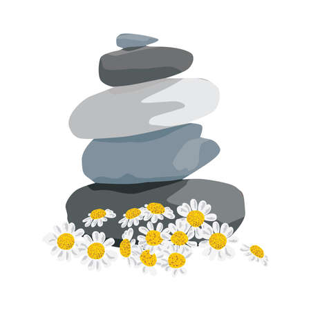 daises flowers and zen stones, vector illustration