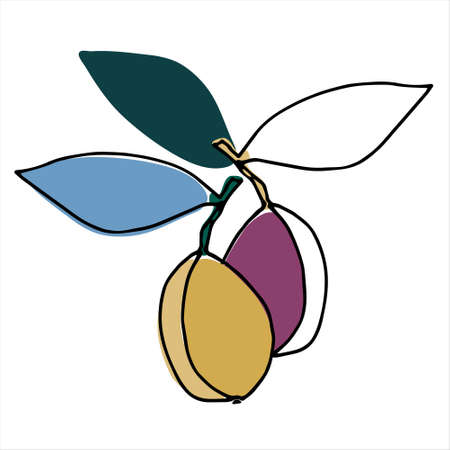 Plums. Hand drawn vector illustration for fruit stores, restaurants and farm markets promotion. Isolated design elements 向量圖像