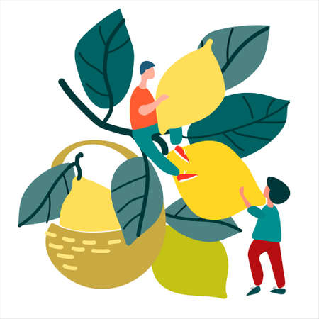 People picking lemons. Hand drawn vector illustration in abstract flat style. Harvesting concept. Agritourism concept. Pick-your-own concept. Fresh fruit concept
