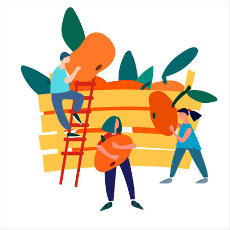 People picking mandarins into wooden crate. Harvesting concept. Agritourism concept. Pick-your-own concept. Fresh fruit concept. Hand drawn vector illustration in abstract flat style