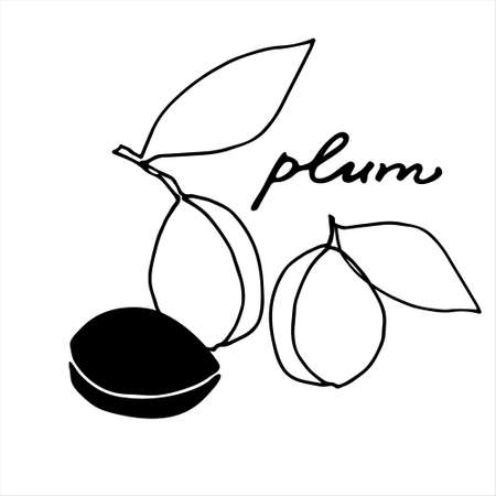 Plums. Black and white vector illustration with hand lettering. Perfect for coloring book, teaching aid, illustrated summary, other design projects