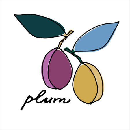 Plums. Colorful vector illustration with hand lettering. Perfect for price tag, teaching aid, illustrated summary, other design projects