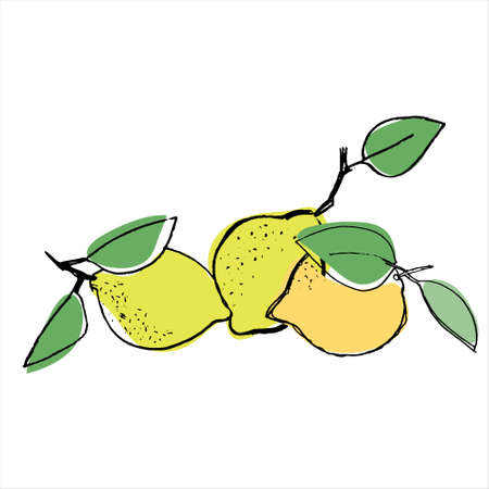 Lemons. Hand drawn vector illustration for teaching aid, price tag, fruit stores, restaurants and farm markets promotion. Isolated design element Imagens - 150327015