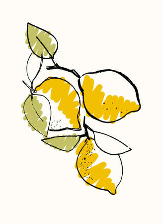 Bunch of lemons. Hand drawn vector illustration for teaching aid, price tag, fruit stores, restaurants and farm markets promotion. Isolated design element Imagens - 150509315