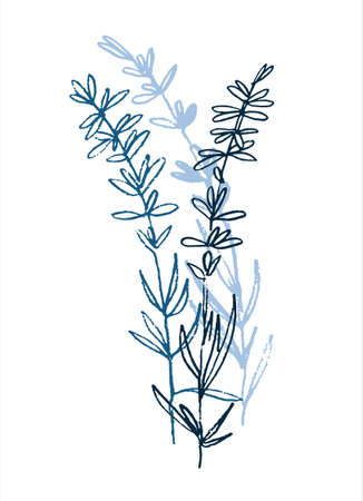 Lavender flowering plant. Mini art print. Hand drawn monochromatic vector illustration