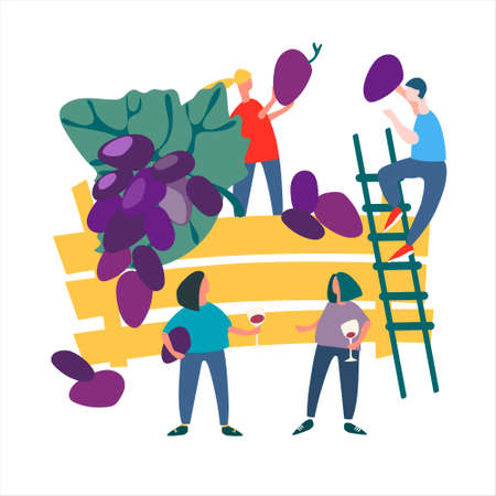 People picking grapes. Harvesting concept. Agritourism concept. Fresh fruit concept. Vector illustration in flat style Ilustração