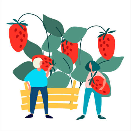 People picking strawberries into crate vector illustration. Harvesting concept. Agritourism concept. Pick-your-own concept. Fresh fruit concept. Vector illustration in abstract flat style