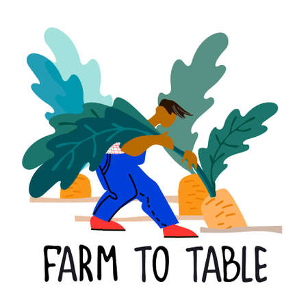 Healthy farm food concept. Fresh vegetables concept. Harvesting concept. Pick your own concept. Man picking carrot vector illustration in abstract flat style  イラスト・ベクター素材