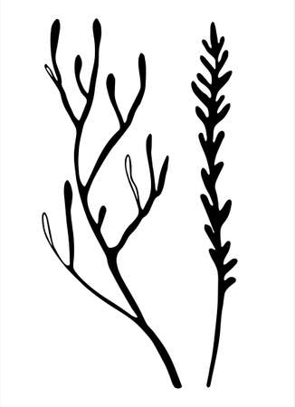 Moss branches line art. Hand drawn vector illustration for decoration purposes. Isolated on white