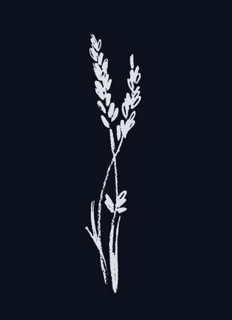 Lavender flowering plant. Realistic line art. Hand drawn monochromatic vector illustration. Isolated on black background
